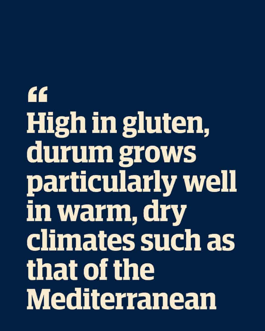 """Quote: """"High in gluten, durum grows particularly well in warm, dry climates such as that of the Mediterranean"""""""