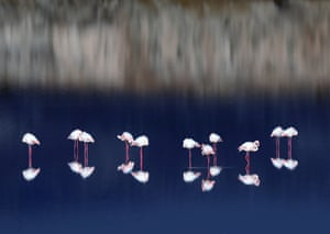 Flamingos wade in a salt lake on the outskirts of Larnaca. Cyprus is a popular pitstop for flamingos migrating from Africa