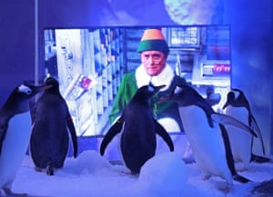 London, UK: Gentoo penguins watching Christmas films at the Sea Life London aquarium. The attraction has installed two TVs, showing festive films, outside the penguin enclosure to prepare them for the stimulation of guests returning on Wednesday after the UK's lockdown is lifted