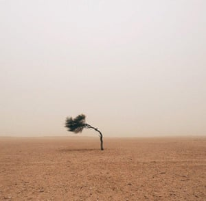 Ruiridh McGlynn of Edinburgh, United Kingdom, took this picture of a wind blasted tree in the desert in Qatar near the Saudi Arabian border and was awarded first place in the tree section.