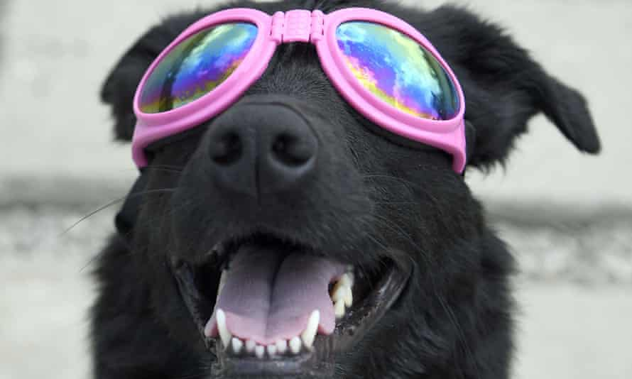 Everyone can enjoy an eclipse. But even this dog is smart enough to wear protective specs, Mr President.