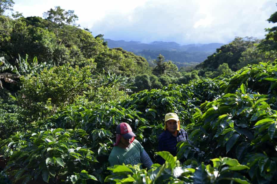 Coffee pickers from Central America working for Café de Monteverde
