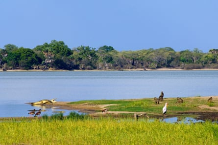 Wildlife along the Rufiji river, Selous game reserve, Tanzania.