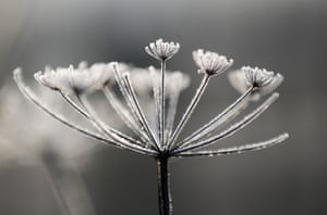 As the sun rises, overnight frost clings to the fauna and flora at Neumann's Flashes nature reserve in Northwich