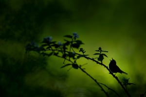 Singing Silhouette by Raymond Hennessy, USA