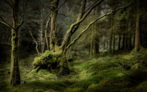 The Earth Photo shortlist includes David Rippin's, Forest Depths (2018) taken in a woods above Blea Tarn in the Lake District.