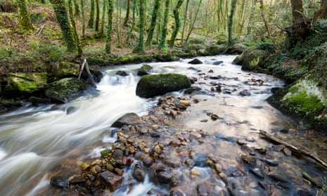 The Par River in the Luxulyan Valley.