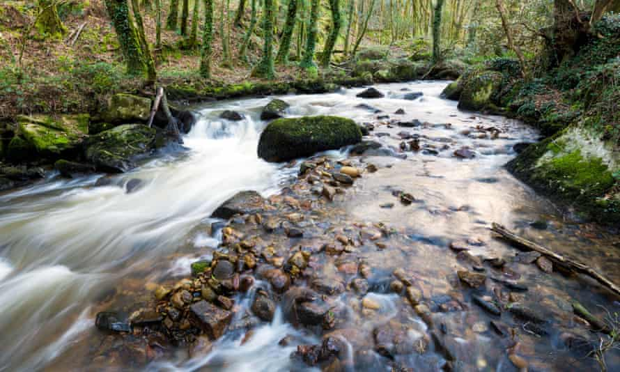 The River Par cascading over mossy boulders at Ponts Mill in the Luxulyan Valley near St Austel in Cornwall.