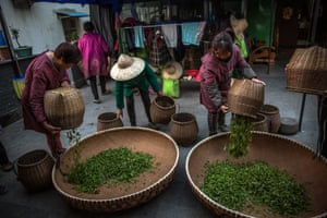 Workers pour out newly harvested tea leaves