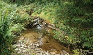 A stream close to the Llyn Brianne reservoir, Brecon Beacons, mid Wales, that forms part of the study project