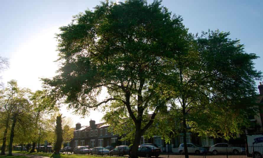 Dutch elm disease: the fightback begins