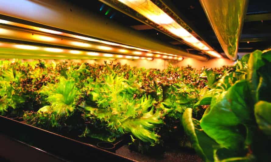 An indoor farm in Canada