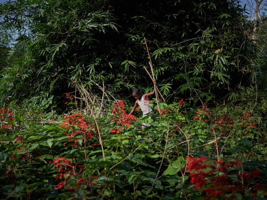 Jose Lisisa, 10, clears foliage and wood around his village on the outskirts of Mbandaka