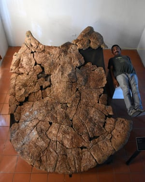 Palaeontologist Rodolfo Sanchez lies alongside a male carapace of the giant turtle Stupendemys geographicus, from Urumaco, Venezuela.
