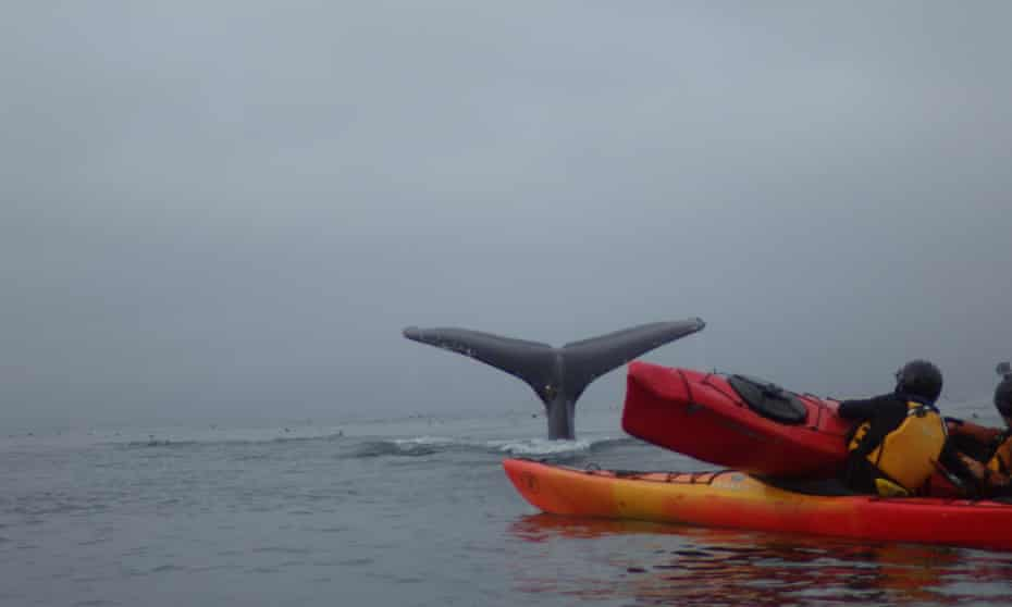 Kayakers Tom Mustill and Charlotte Kinloch with the tail of a whale in the background