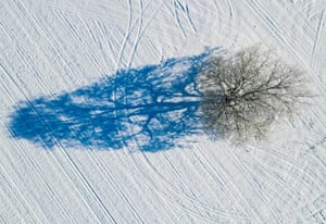 A tree covered with hoarfrost casts a shadow on the snowy field