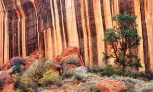 Stripes of desert varnish line the canyon walls of Capitol Gorge in Utah's Capitol Reef National Park.