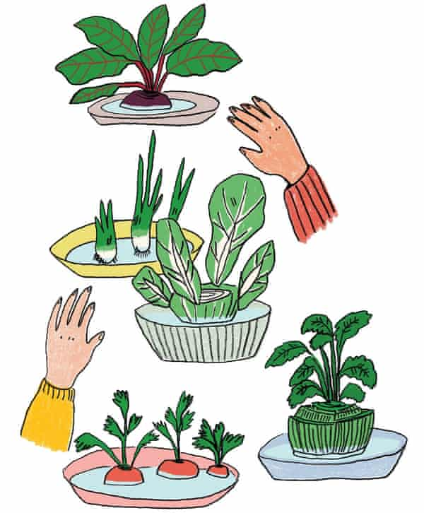 Illustration of plant tops