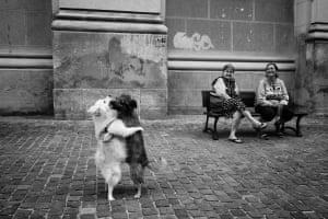 Dancing dogs in Bucharest