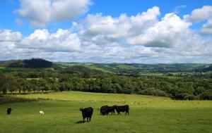 The view across the meadows towards the Afon Rheidol.