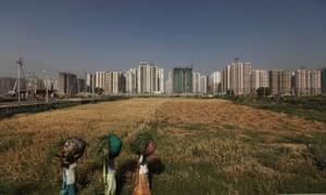 Women walk through a small wheat field in New Delhi.