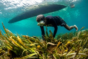 A local diver collects seaweed.