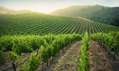 California lightens up: three of its most drinkable wines