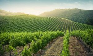 Vineyards in Napa Valley, California.