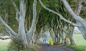 Down the Kings Road … Dark Hedges, near Ballymoney, County Antrim.