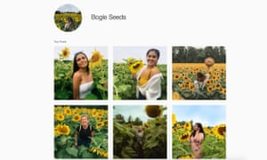 Crowds trampled the sunflower fields at the Bogle family farm in Ontario.