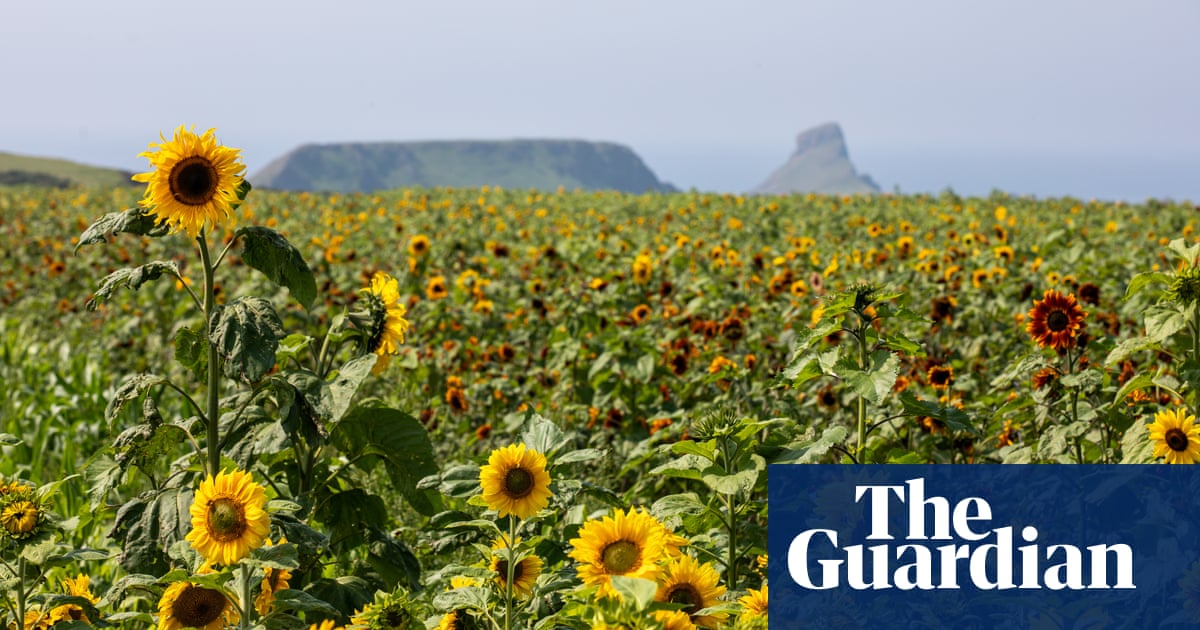 Gower power: a fresh foodie tour of south-west Wales