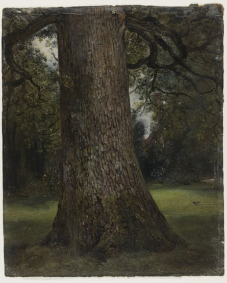 Study of the Trunk of an Elm Tree, c1821-28, John Constable.