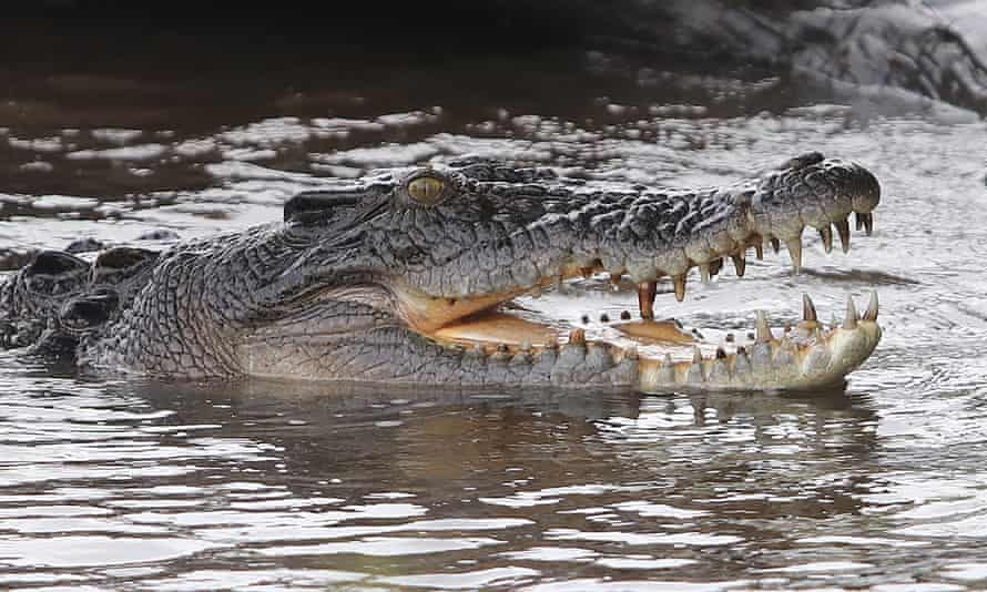 A crocodile seen during the yellow river boat cruise in Kakadu National Park, Northern Territory, Australia.