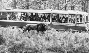 Longleat coach with lion