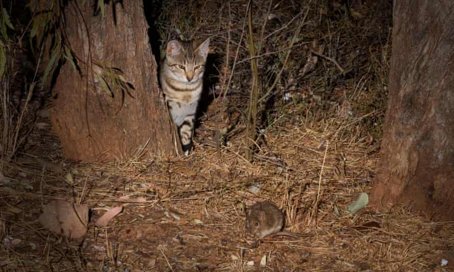 Feral cats were the costliest of the individual species studied but the most damaging class of pest is plants