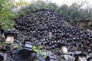 Muyu, ChinaHundreds of beehives hang from a cliff on Guanmen mountain, where Chinese beekeepers are trying to help increase the population of wild bees
