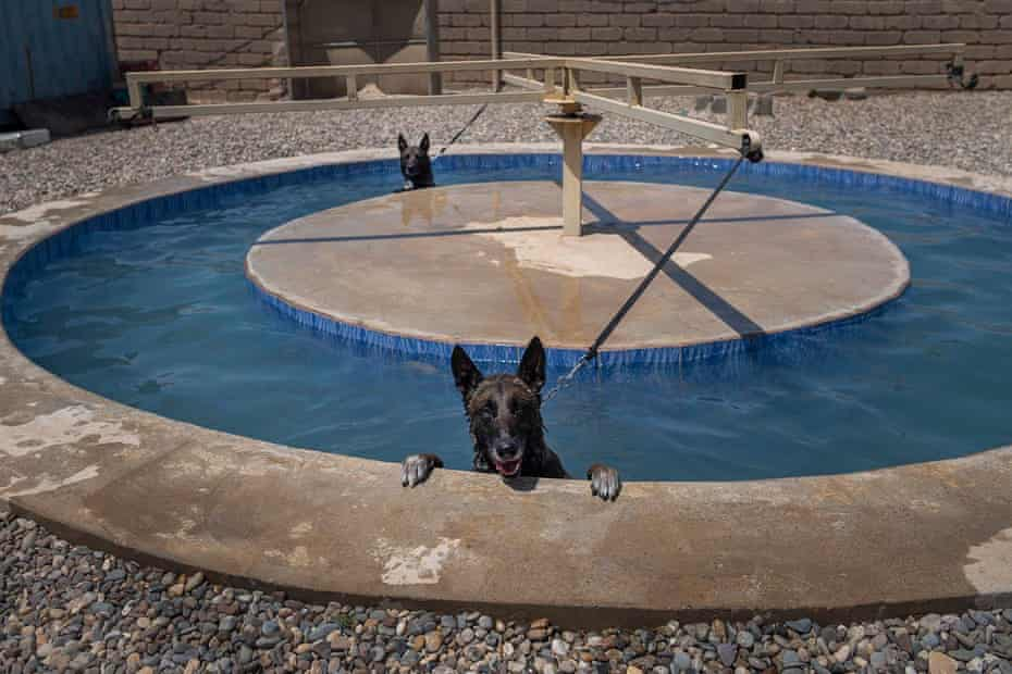 Dogs in circular pool with rotator arm in middle