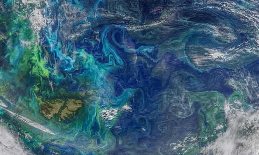 An image of eddies in the southern Atlantic Ocean taken by Nasa that shows phytoplankton blooms (in green and light blue).
