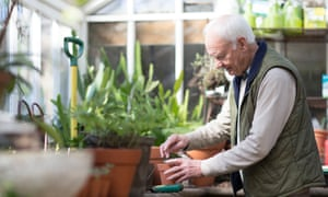 Senior man working in a greenhouseSenior man, aged 78, gardening in a greenhouse