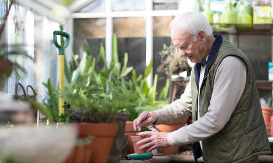 Senior man working in a greenhouseSenior man, aged 78, gardening in a greenhouse