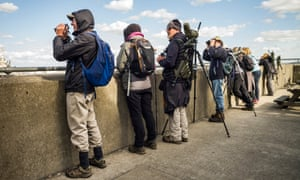 Whale spotters in Gravesend hoping to catch a sight of the beluga whale.