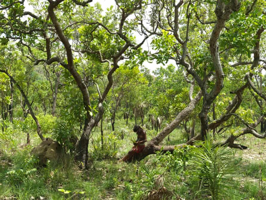 A number of companies support a new agreement to stop deforestation for soya in the Cerrado, but opposition in Brazil has meant no action has been taken.