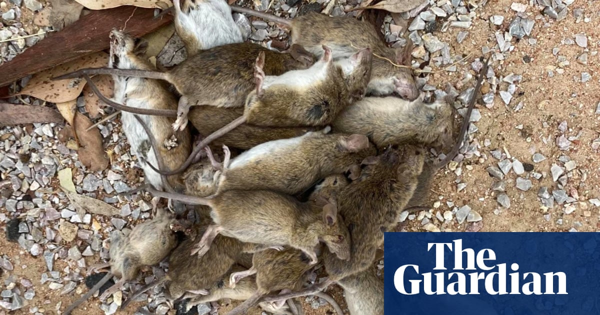 Emergency permit allows farmers battling Australian mouse plague to use double-strength bait
