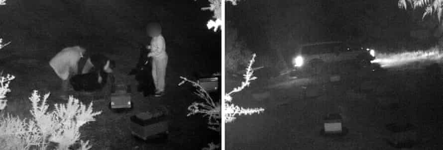 CCTV footage from a suspected raid on the hives of Daykel Apiaries, in far Northland, New Zealand