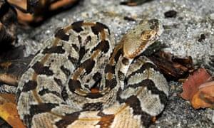 Massachusetts snake island