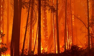 Trees burn as flames move towards Berkeley's Tuolumne family camp near Groveland, California