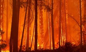 Trees burn as flames move towards Berkeley's Tuolumne family camp near Groveland, California