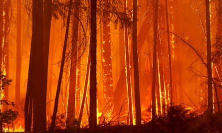 'Bird die-offs, mass fish deaths, wildfires and storms are just the beginning …'