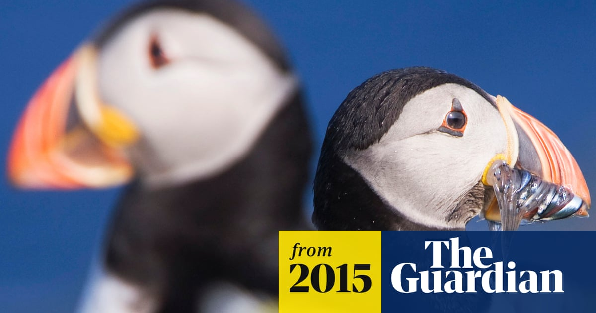 Puffins And Turtle Doves At Risk Of Being Wiped Out Say Experts