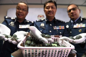 Sepang, Malaysia. Customs officials display red-eared slider turtles seized after a foiled smuggling attempt